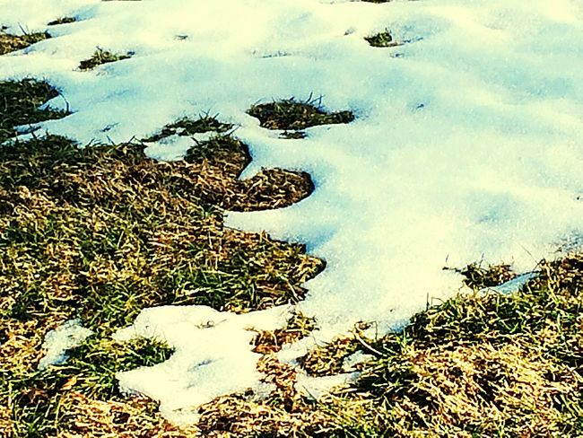 Snow Snow Covered Aftermath Of Snowstorm '16 Snowy Nature_collection Eyemnaturelover Mothernature Nature Grass