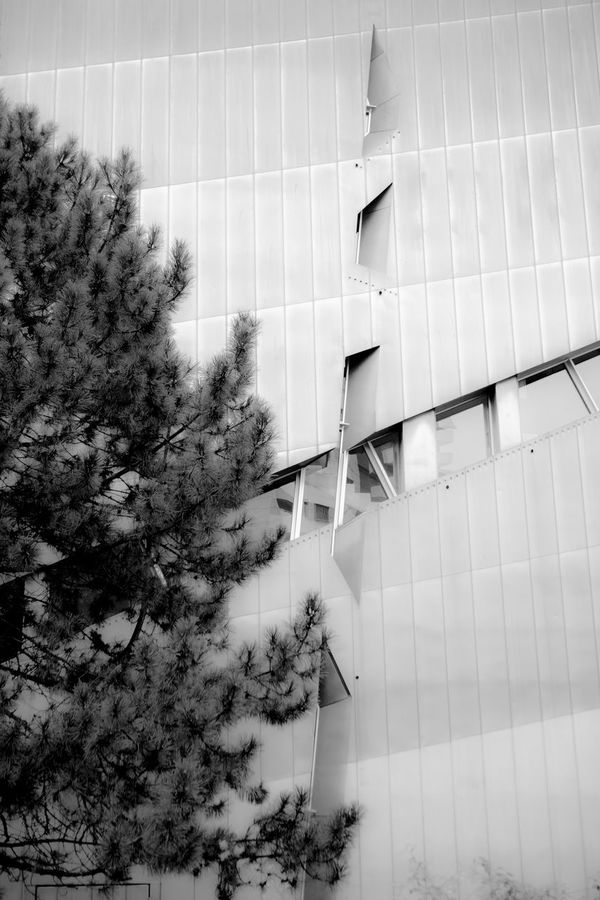 Architecture Berlin Berlin Alexanderplatz Berlin Mitte Berlin Photography Building Built Structure City Day Growth Jewish Museum Jewish Museum, Berlin Life Light Light And Shadow Low Angle View Memorial Modern No People Outdoors Plant Travel Travel Photography Traveling Tree