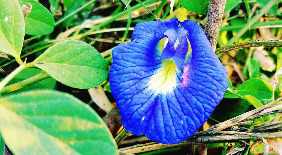 Flower Collection Blossoming  Blues Beautiful Flower Fresh And Clean Flowers, Nature And Beauty Mesmorising Pastel Power @$RG...