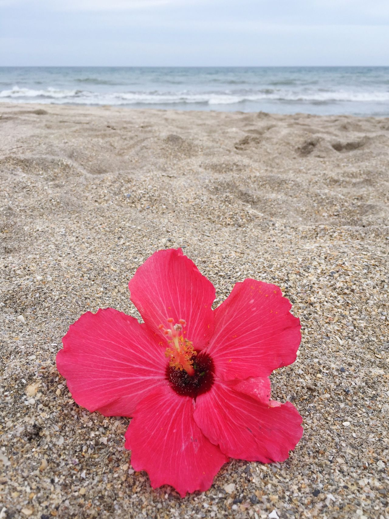 Beach Nature Sea Beauty In Nature Sand Water Horizon Over Water Outdoors Day No People Tranquility Scenics Flower Pink Color Sky Close-up Flower Head Freshness Hibiscus Beachphotography Beach Photography Beach Life Sand & Sea