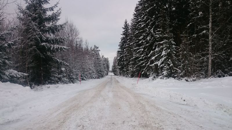 Road Roadtrip Frosty Frozen Cold Cold Days On The Road Winter Snow Frost Ice Middle Of Sweden Spruce Trees Trees Slippery Roads Slippery Icy Road Icy Norrland Swedish Winter Hälsingland