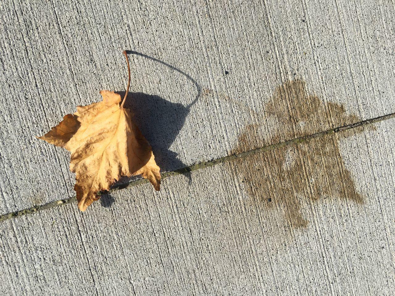 Autumn leaf and sidewalk leaf impression, Fragility, Patterns In Nature, Transitions