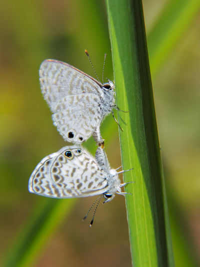 Animal Themes Animal Wildlife Animals In The Wild Beauty In Nature Butterfly Butterfly - Insect Close-up Full Length Insect Leaf Magazhu Nature No People Outdoors Yelapa