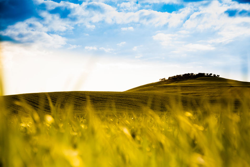 Nature Beauty In Nature Cereal Plant Cloud - Sky Colors Crop  Day Farm Field Grass Grass Growth Horizon Over Land Landscape Nature No People Outdoors Rural Scene Sky Summertime Tranquil Scene Tuscany Countryside Warm Wheat Yellow