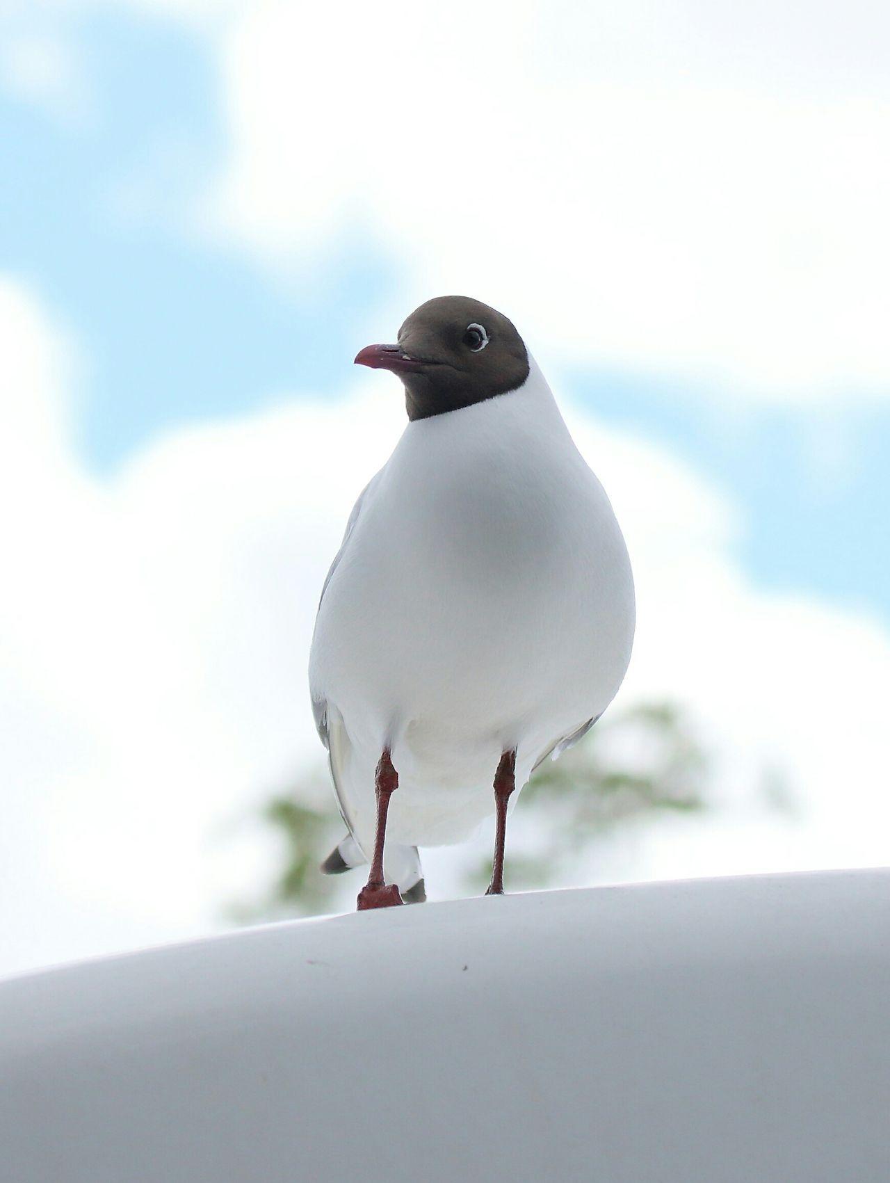 Seagull The Great Outdoors - 2015 EyeEm Awards White Tern Himmel Bird Standing EyeEm Best Shots Eye4photography