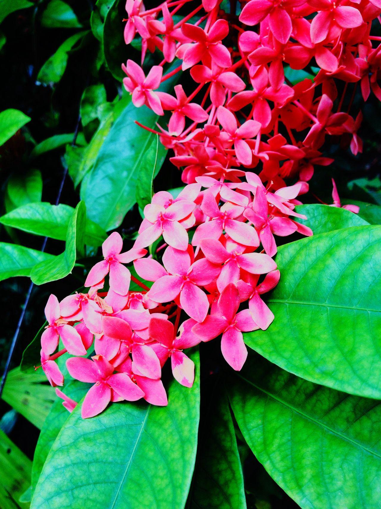 Pink Diversidad Naturaleza🌾🌿 Fotografia