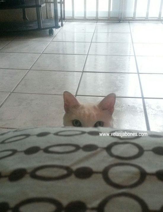 Mota. Catoftheday Cat Eyes Furniture Fur Pussycat Cat♡ Light And Shadow