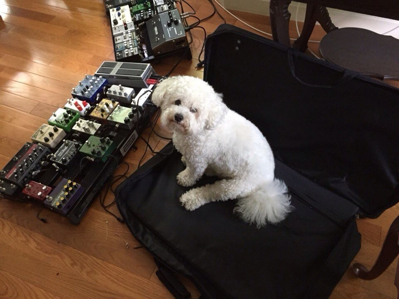 Добрый чувак)) песа Собакен животные музыка