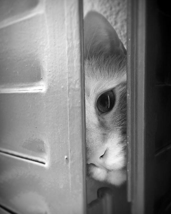 Taking Photos Cute Pets Cats Cat Blackandwhite Blackandwhite Photography Enjoying Life Pets Corner
