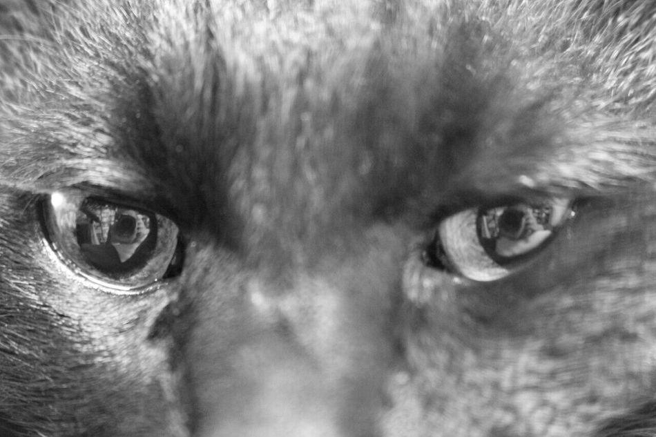 その目は何思う? Black Cat Cat BLackCat Black & White Pets Pet Photography  Pet Love Blackandwhite 黒猫Love