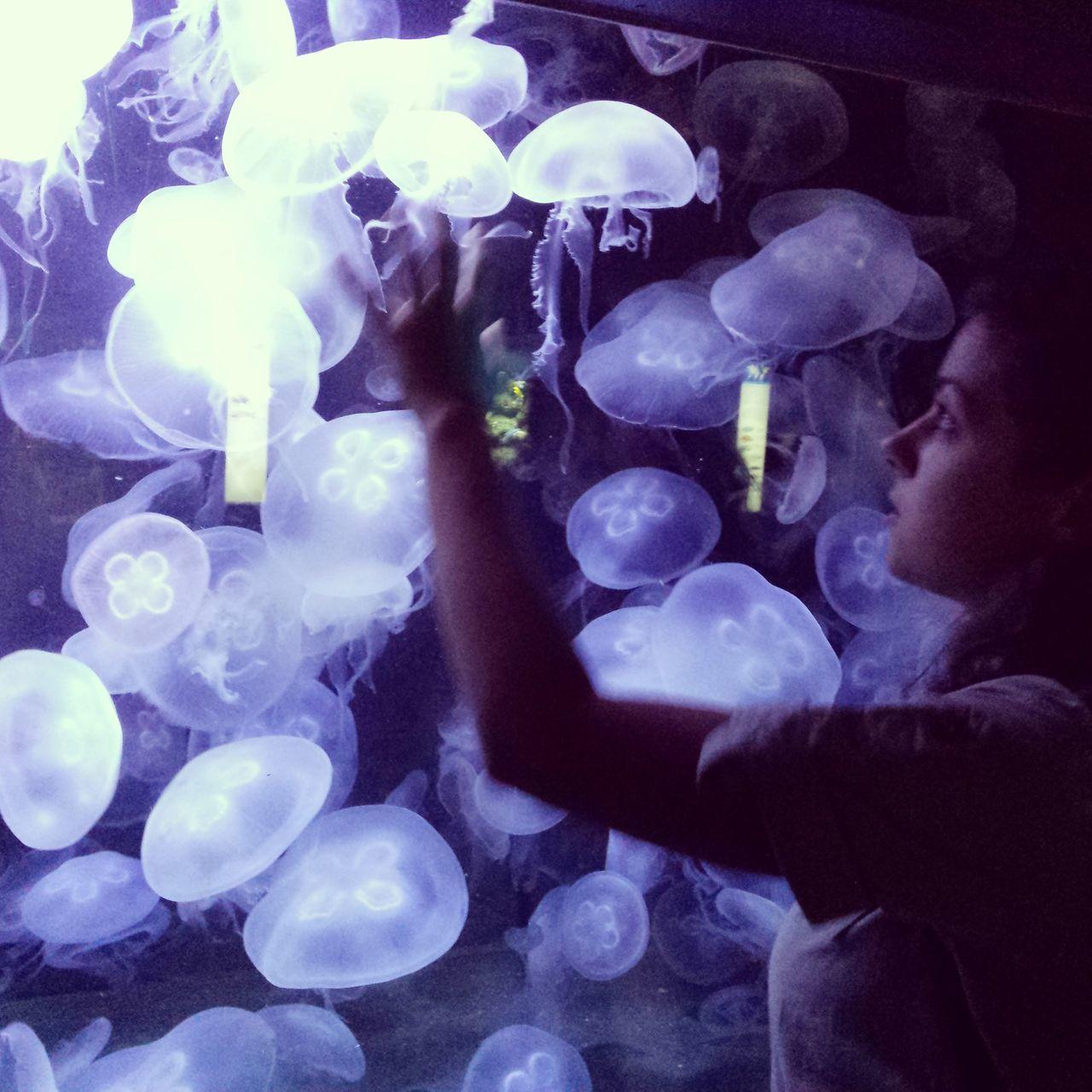 Girl From Another Planet Girl From The Future Future Cosmic Cosmic Life Jellyfish Aquarium Aquarium Life Sea Life Girl Futuristic Fantasy Fantastic Blue Waters Water Mädchen Aus Der Zukunft Zukunft Kosmisch Fantastisch Quallen Wasser