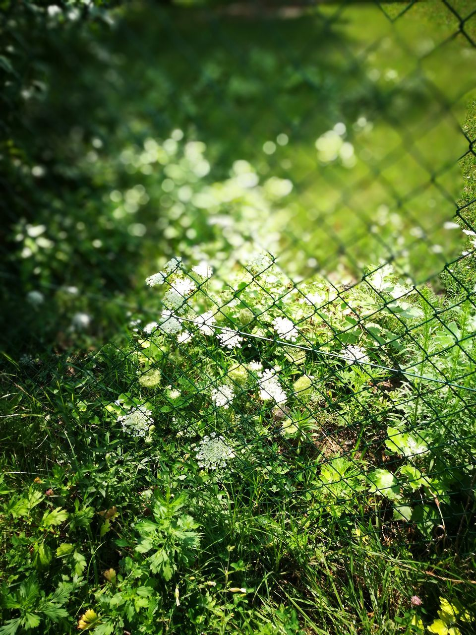 growth, nature, green color, beauty in nature, tree, day, fragility, outdoors, no people, tranquility, branch, freshness, plant, flower, close-up