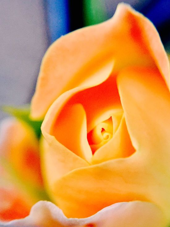 Pastel 🍊 tangerine color or peach pastel Iphonephotography