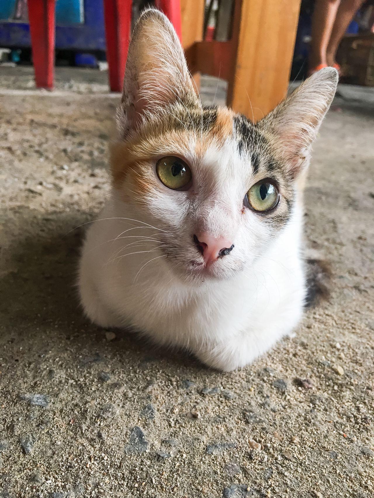 Kitten Kitten 🐱 Cats Little Cat Cute Pets Lookingup Eye Small Cat Alone