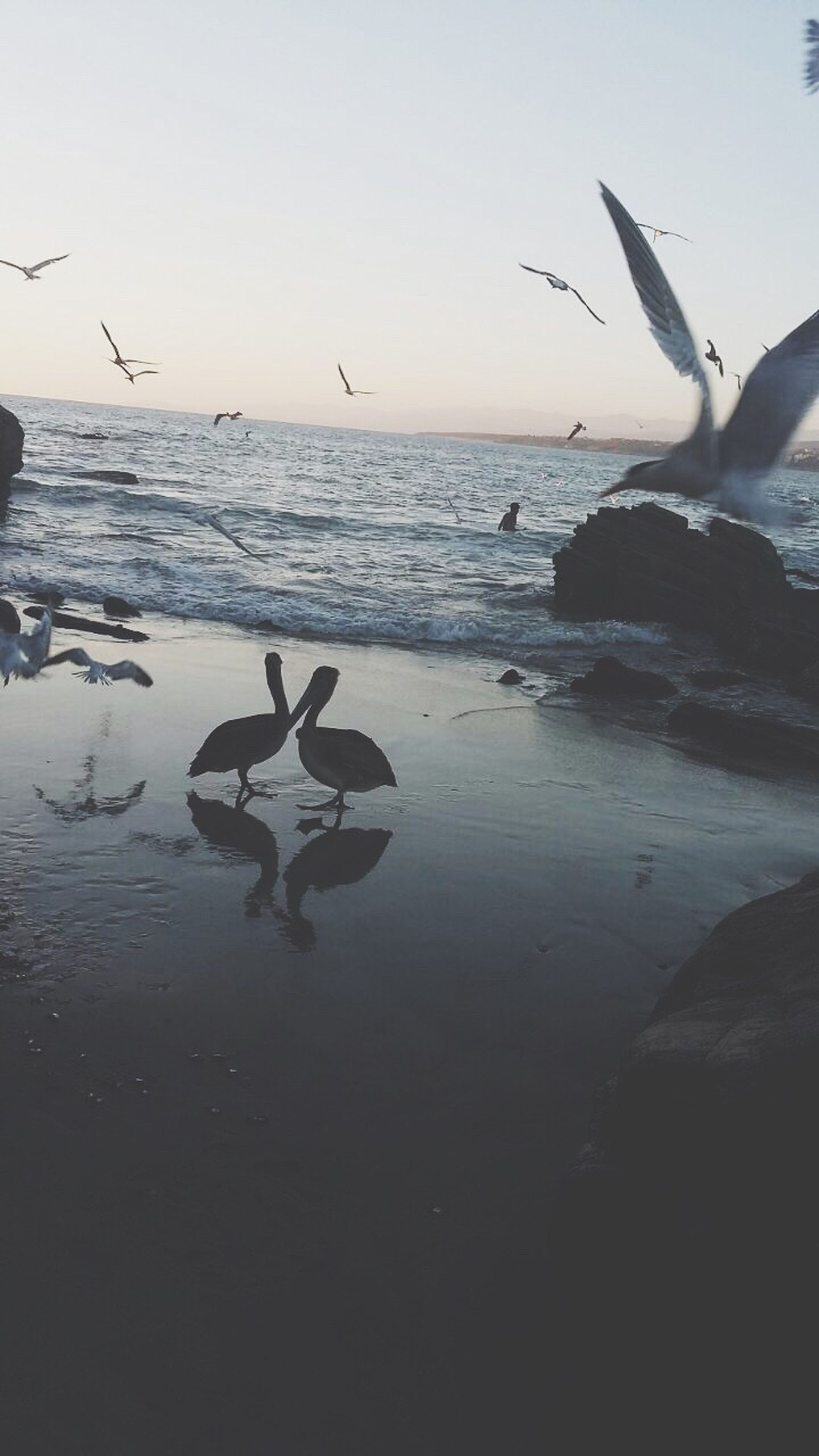 flying, bird, animal wildlife, sunset, animal themes, animals in the wild, one animal, sea, sky, outdoors, animal, silhouette, beach, nature, no people, beauty in nature, water, day