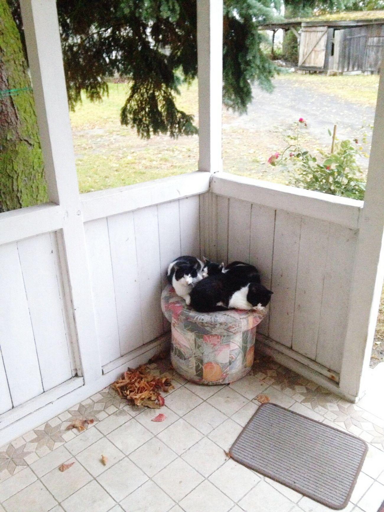 Moje koty:) My cats:) Cats Cat♡ Cat Kot Koty Oligameplay Kitty Cats 🐱