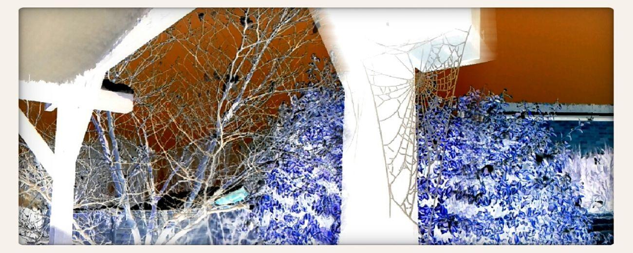 Cobwebs and snow !