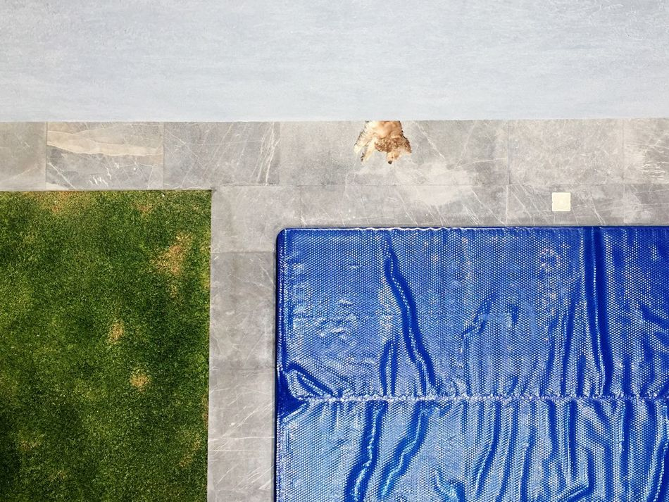 No People High Angle View Animal Themes Outdoors One Animal Pets Mammal Day Domestic Animals Grass Swimmingpool Sunbathe Cavalier King Charles Spaniel EyeEmNewHere