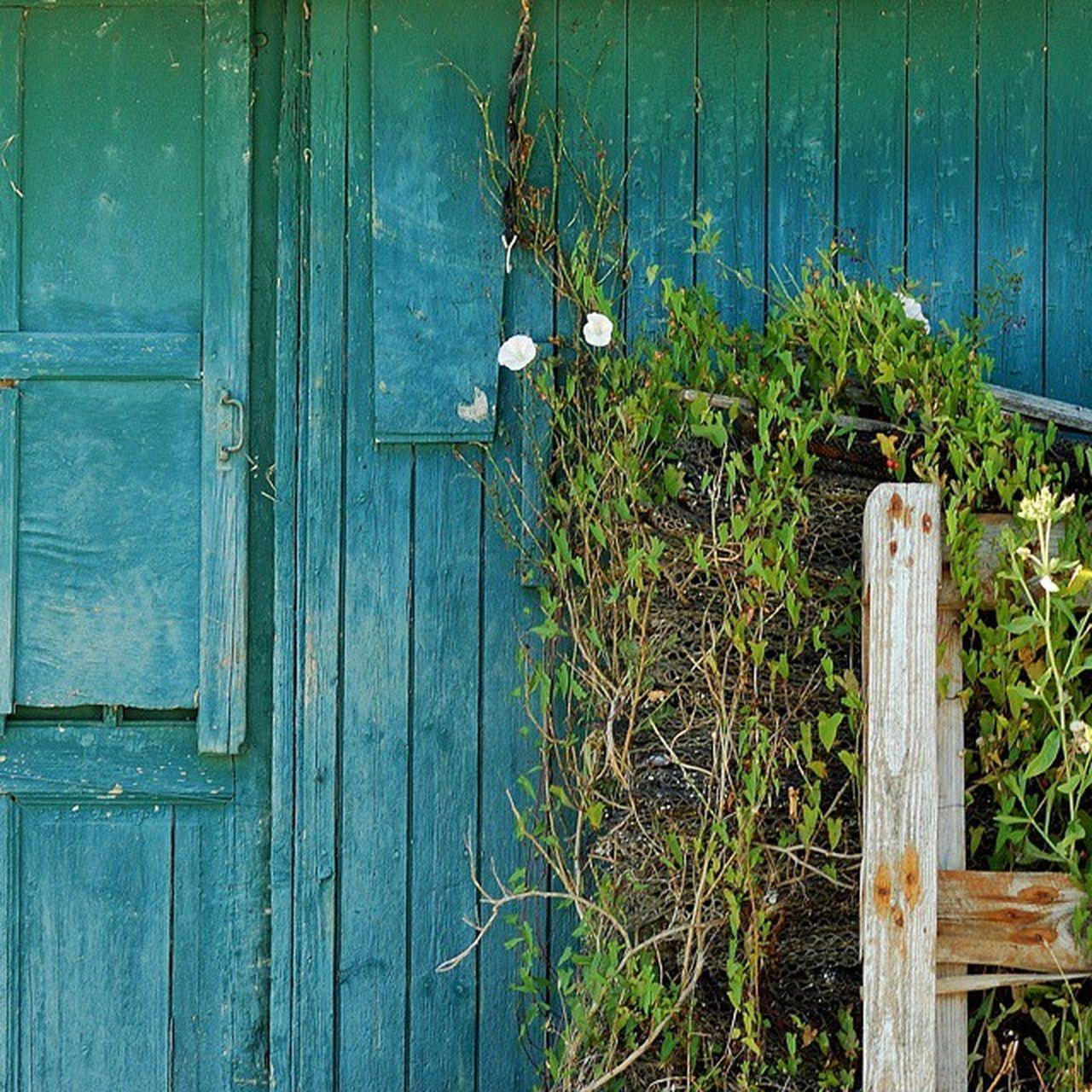 Cabane ostréicole Saintrojanlesbains Cabanesostreicoles Oleron Charantemaritime bleu vert