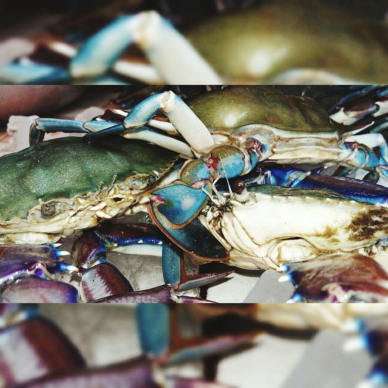 Excelencia No People Close-up Day Transportation Car Interior Summertime Cloud - Sky Indoors  animalesaAnimales Adorables Animalessueltos Animales En Libertad Sueñaconmigo Animales Animales De Poder AnimalesDeLaSelva Animalesasomados Mariscos, MariscosalaThermidor Marisco Excelencia Verano Sueños Vivos Sueño De Una Noche De Verano Only Men Vehicle Interior