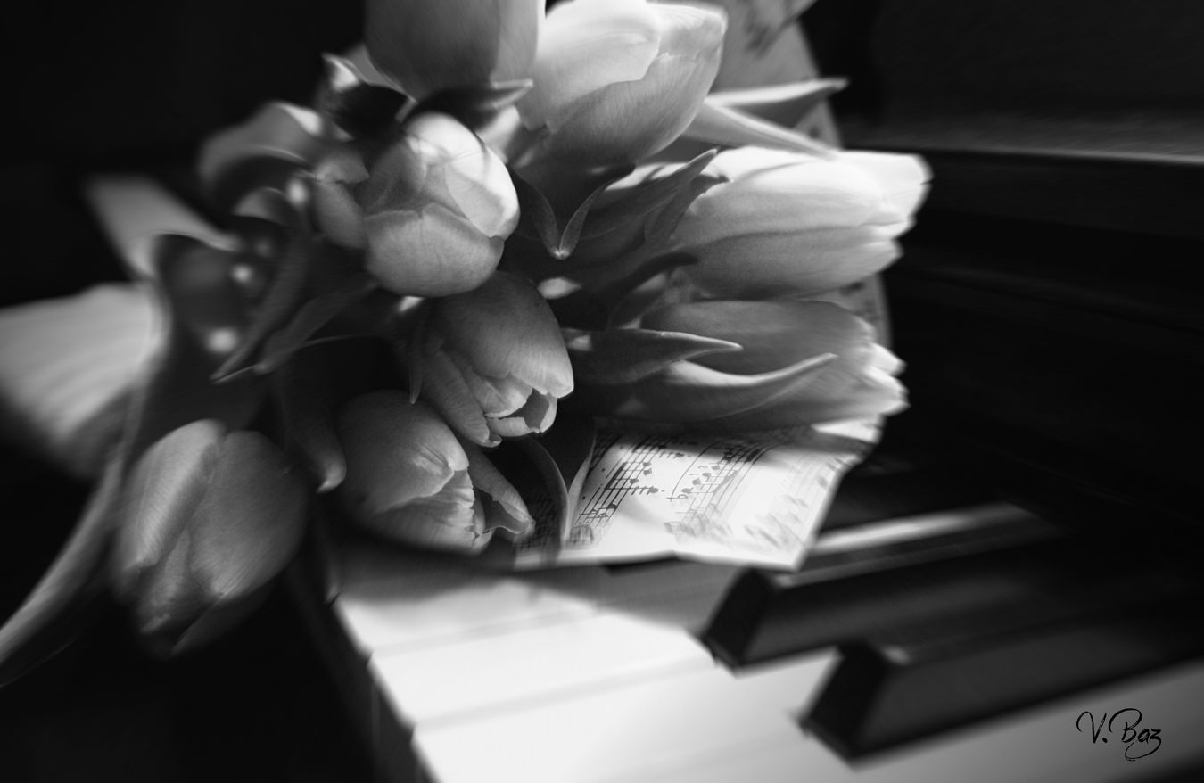 Happy friday my friends! Another version... in my dreams Close-up Tulips🌷 Piano Moments Blackandwhite Photography Darkness And Light Fragility Romantic Creative Light And Shadow Playing With Light Flowerpower Light And Shadow Music Tulips Tranquility No People Indoors  Indoors  Flower Freshness Blackandwhite Darkart Piano Bwn_friday_eyeemchallenge