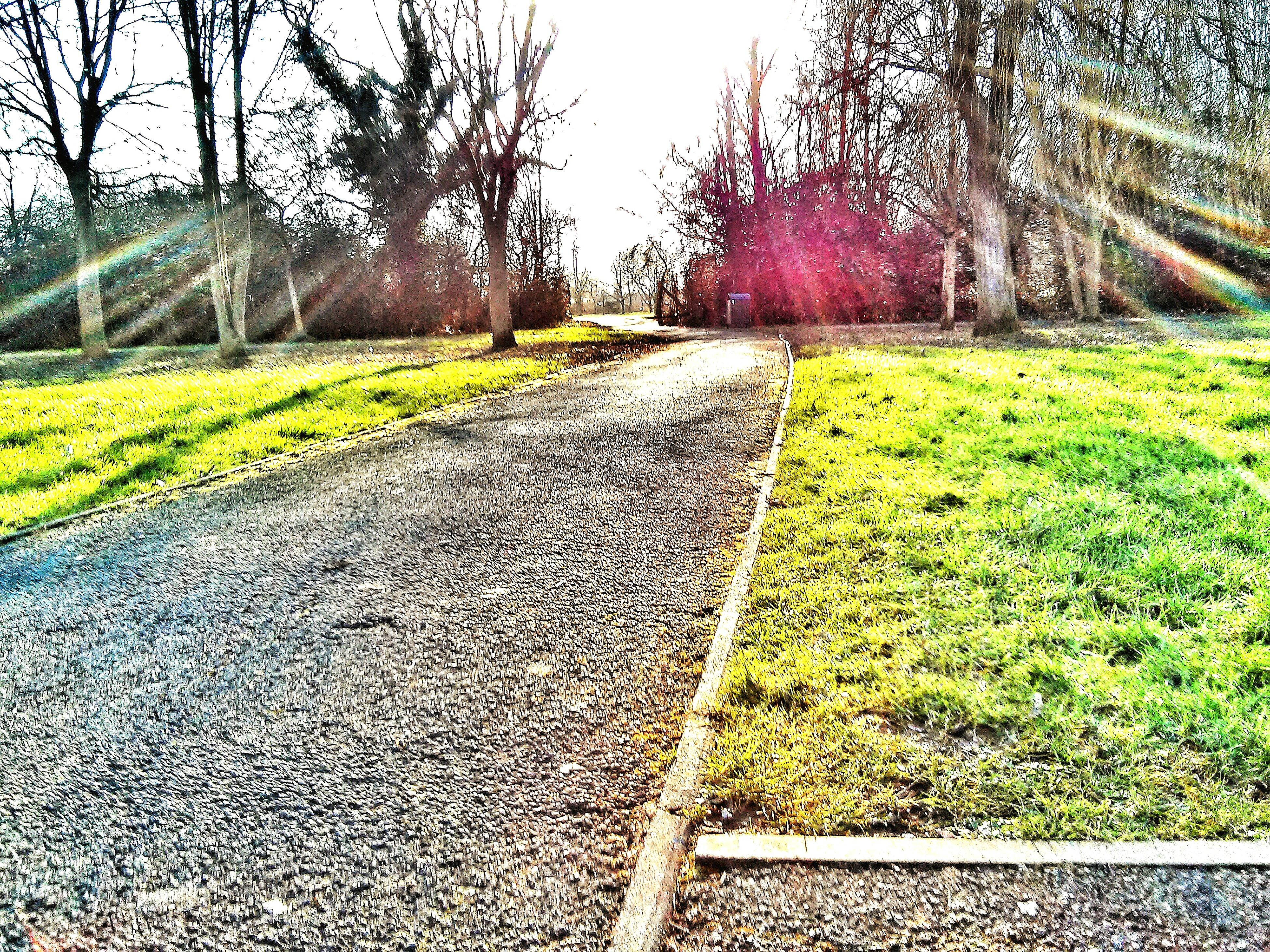 the way forward, diminishing perspective, vanishing point, tree, built structure, transportation, grass, sunlight, architecture, building exterior, day, growth, outdoors, nature, footpath, surface level, no people, plant, walkway, pathway