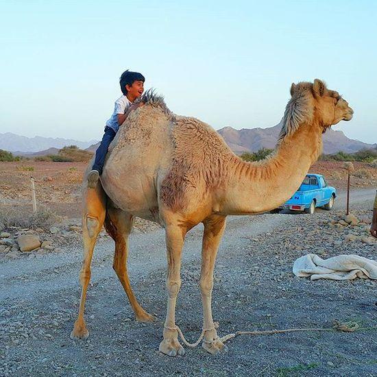 * مال اللزوم الا قويين العزوم وترديد بعض الهرج ما له فايده المرجله سهله على عيال القروم اما على ( اضعاف الروابع ) كايده لقائلها غرد_بصورة Oman_photo Oman_photography Oman Oman_picart @tag.a3 @oman_friends