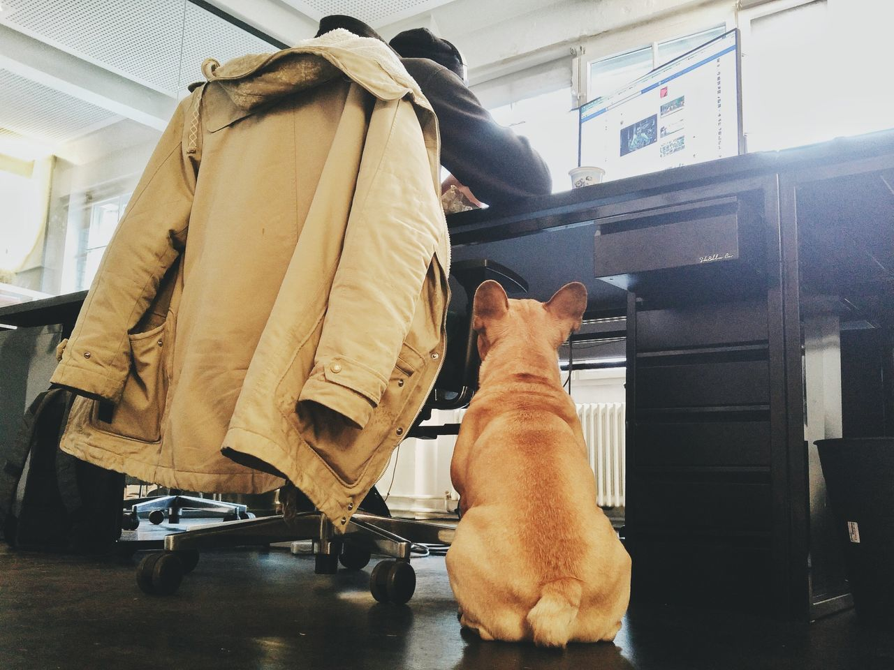Indoors  One Woman Only One Person Close-up Adults Only Low Section Adult People Day Office Dog Office Dog Agencylife Startup Startup Offices Startup Life Berlin French Bulldog Frenchbulldog Dogs Of EyeEm Dog Portrait Portrait Hungry Dog Dog Waiting