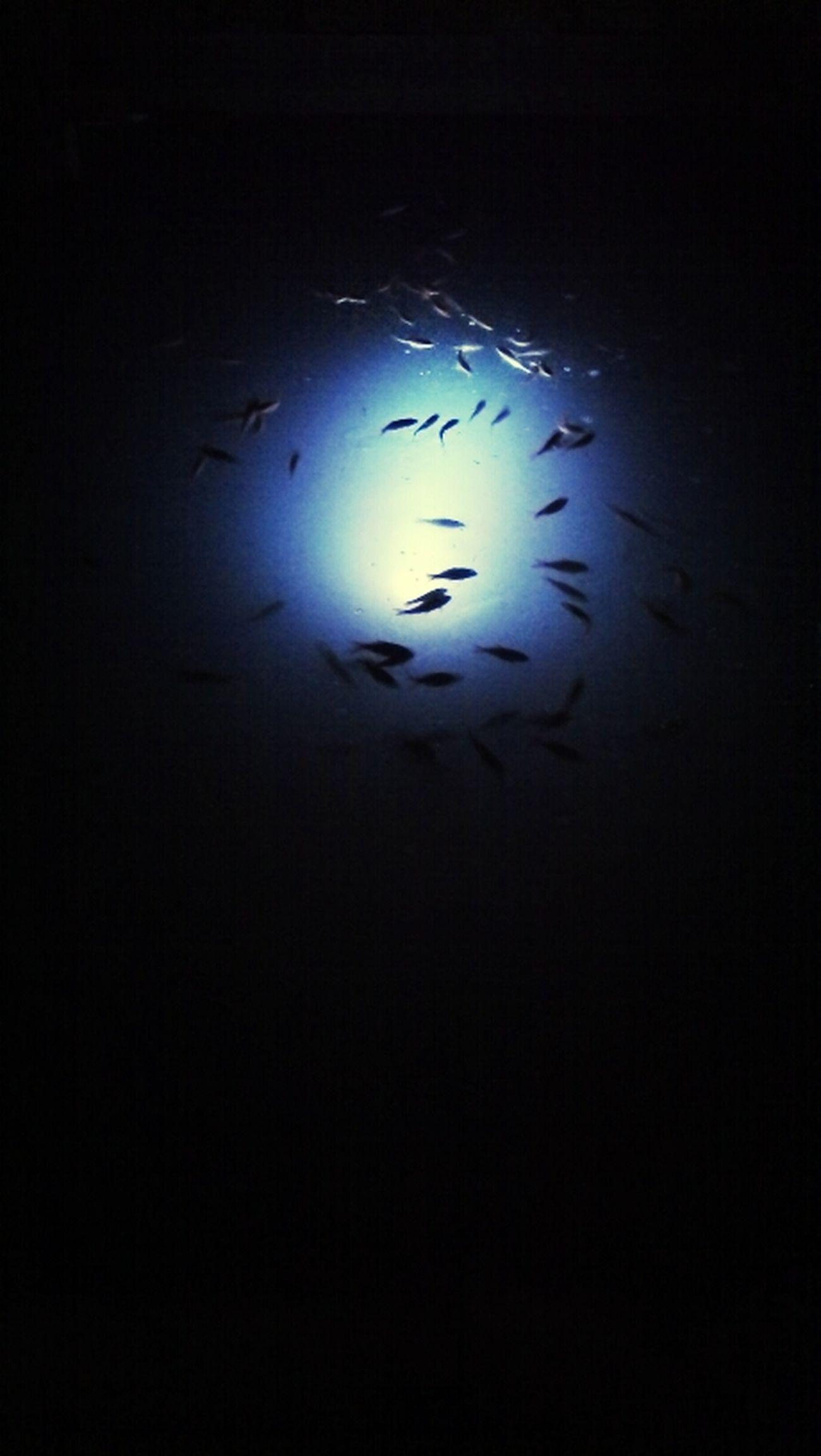 Peces Water Fish
