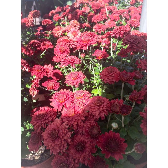 Nature Flowers Beauty