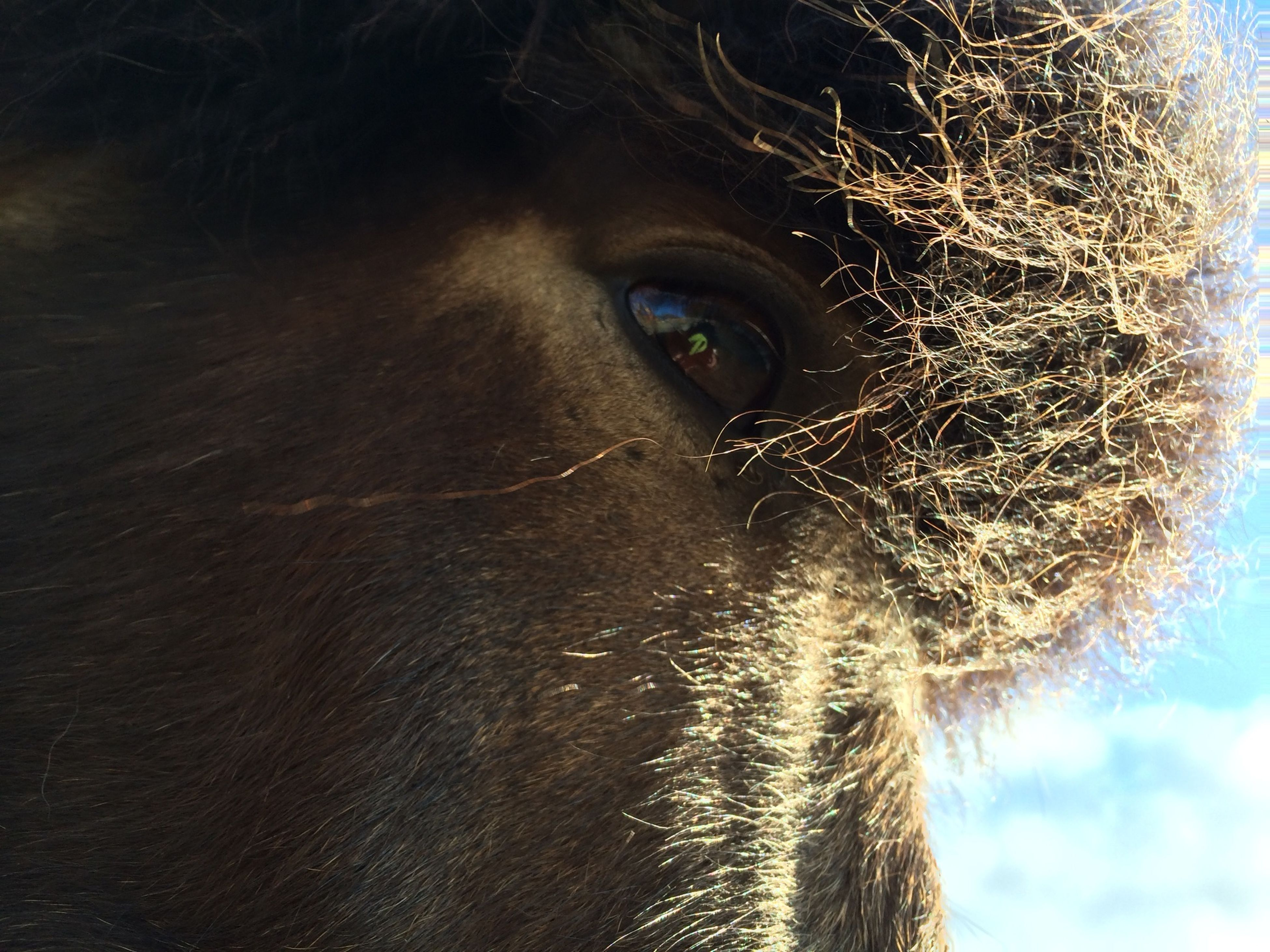 one animal, animal themes, close-up, portrait, animal head, animal body part, looking at camera, part of, front view, one person, animal hair, mammal, domestic animals, focus on foreground, animal eye, outdoors, day, nature, headshot