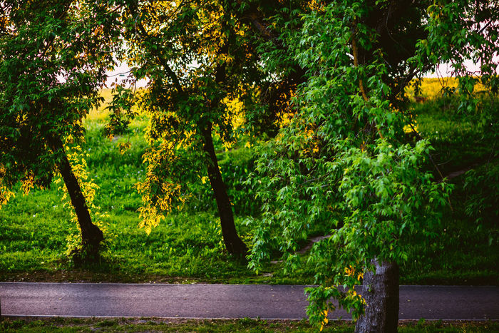 A Bike Lane in The Park Beauty In Nature Bicycle Bicycle Lane Bike Bike Lane Bokeh Day Forest Grass Green Color Growth Nature No People Outdoors Park Plant Scenery Scenics Sunset Tranquility Tree