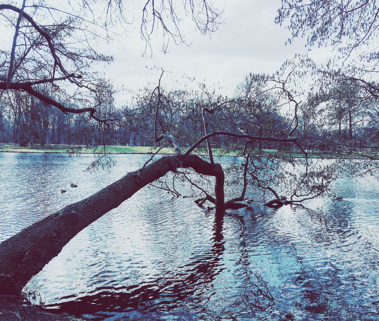 Pastel Power Pastel Colors Pastel Blue Lake View Tree Trunk Tree_collection  Nature Calm Charlottenburg