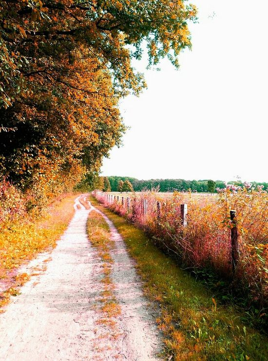 Nature Reserve Langenfeld Rheinland Autumn Landscapes Still Life Landscape_photography Impression Outdoors No People Nature Beauty In Nature Red Field Landscape Trees Growth The Way Forward Footpath Forest Forestwalk Forest Path Nature Photography Naturelovers Nature_collection