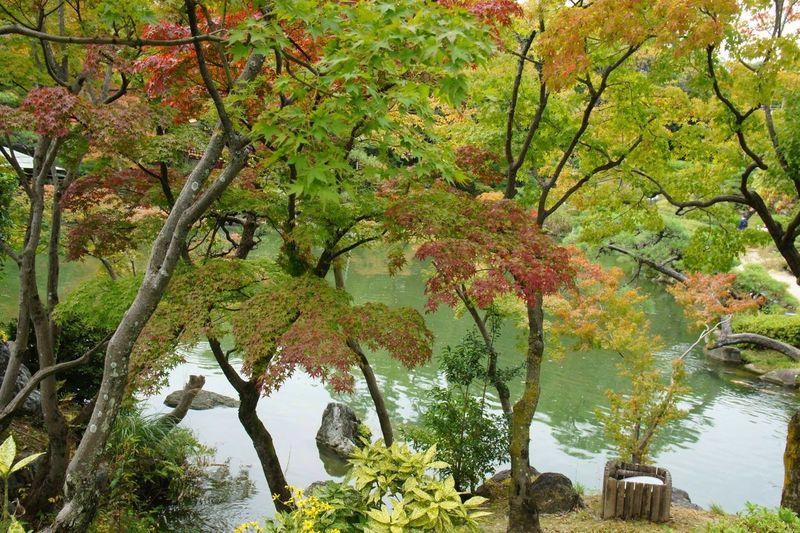 Kobe*Japan Autumn Flowers Garden Japan Kobe
