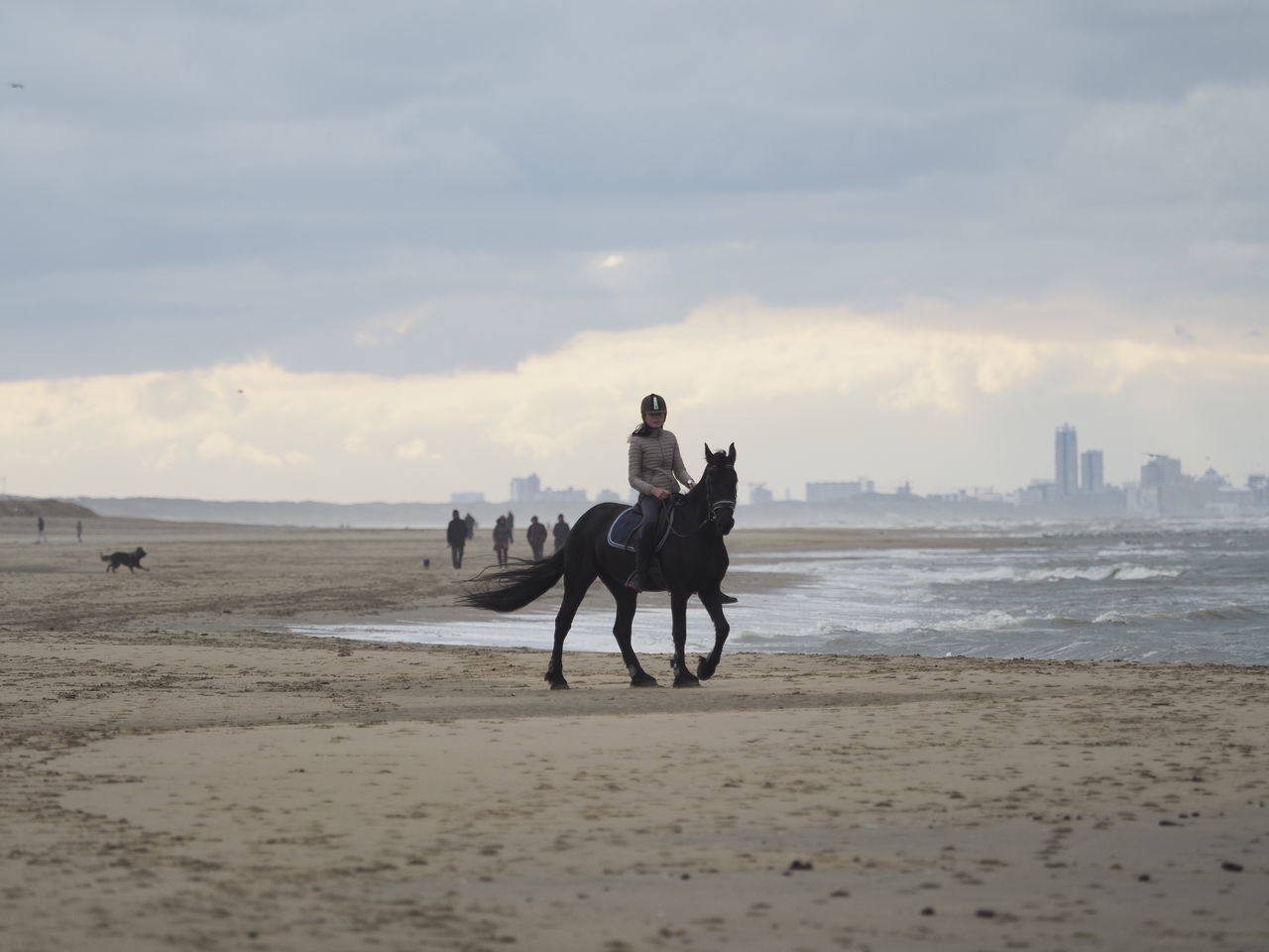Horse Beach Animal Travel Animal Themes Outdoors Working Animal Animal Wildlife Nature One Animal Mammal Scenics Domestic Animals Sand Day Adult Water Sky