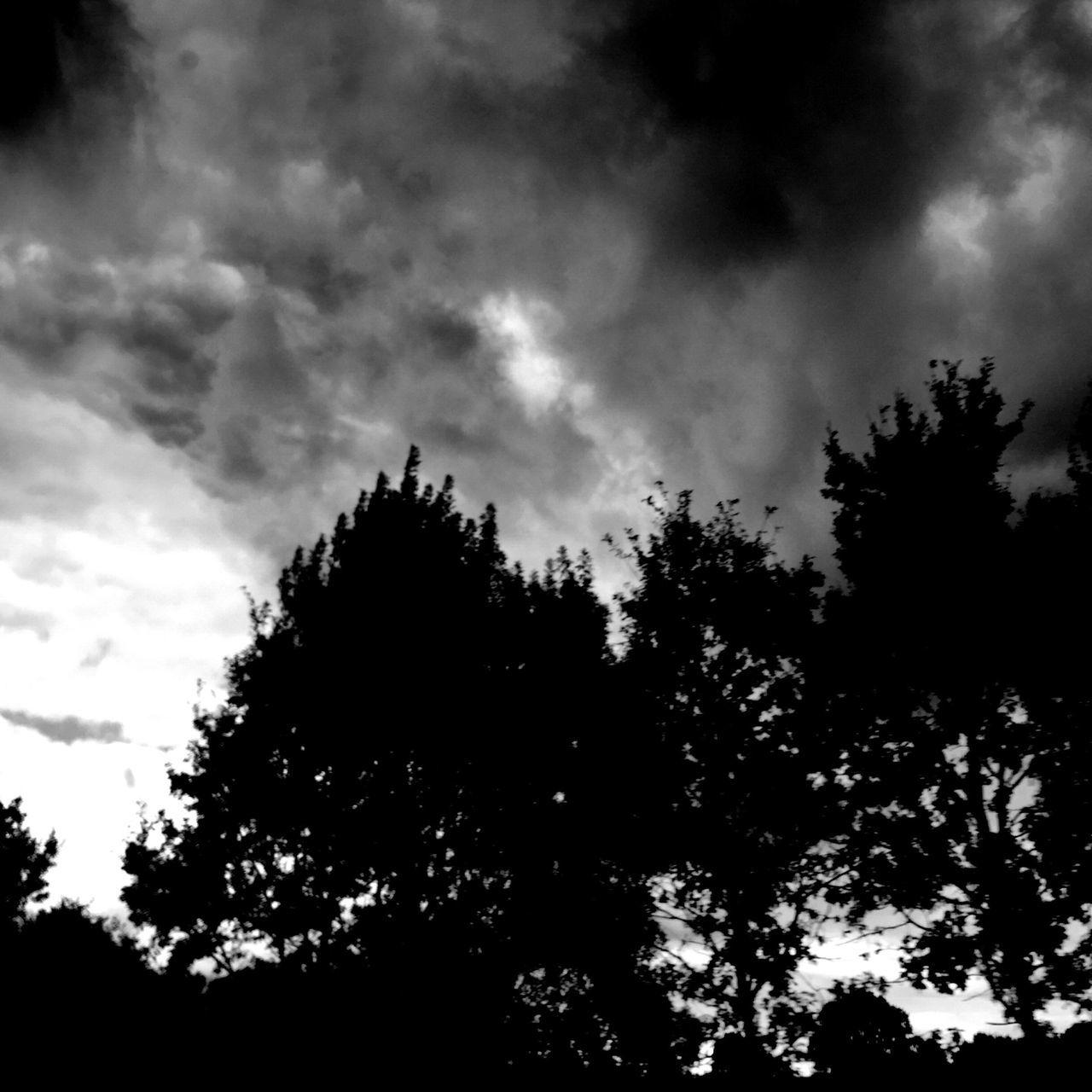 Clouds Trees Blackandwhite NEM Black&white
