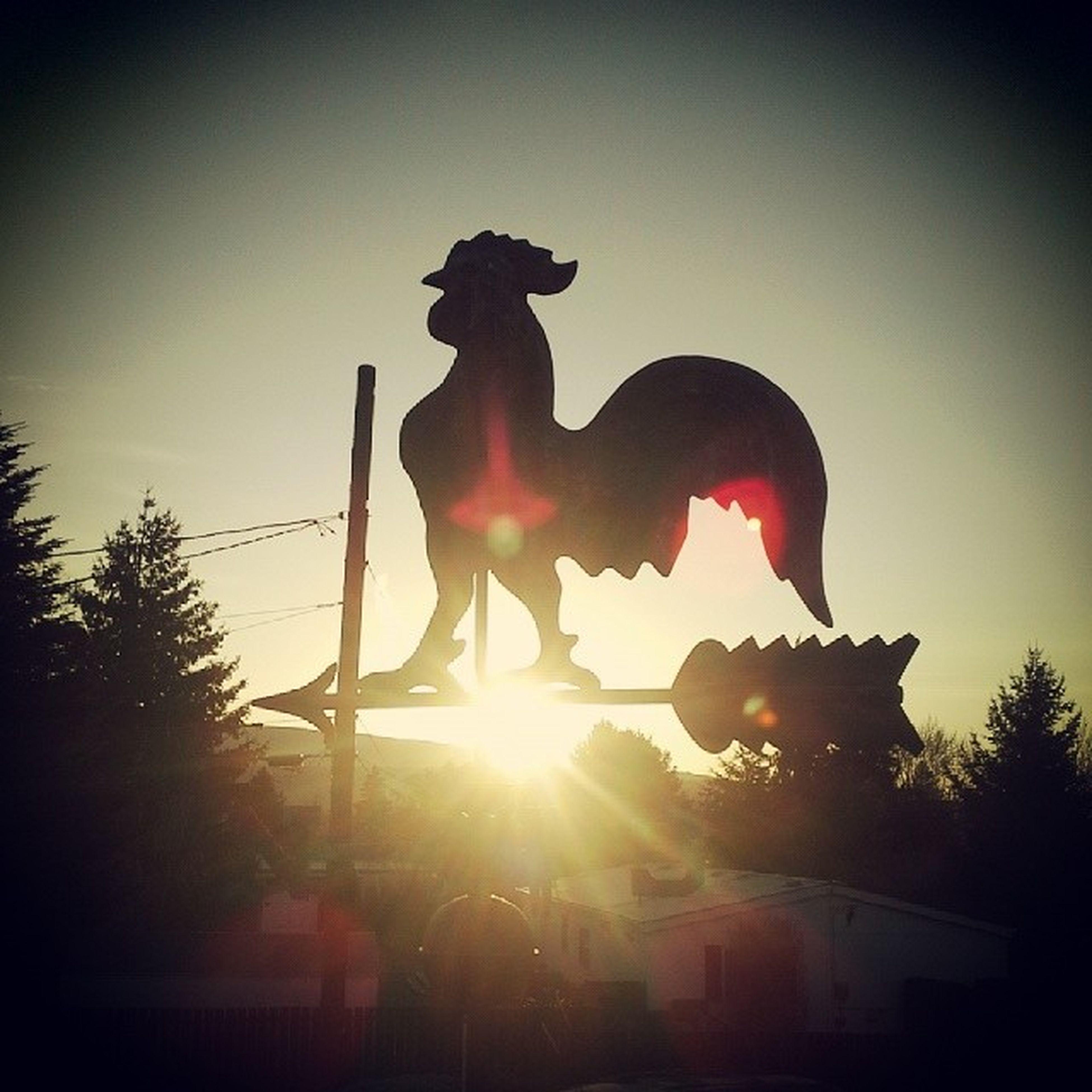 statue, sculpture, human representation, art and craft, art, sun, creativity, sunbeam, transfer print, silhouette, sunlight, low angle view, lens flare, auto post production filter, clear sky, sky, animal representation, sunset