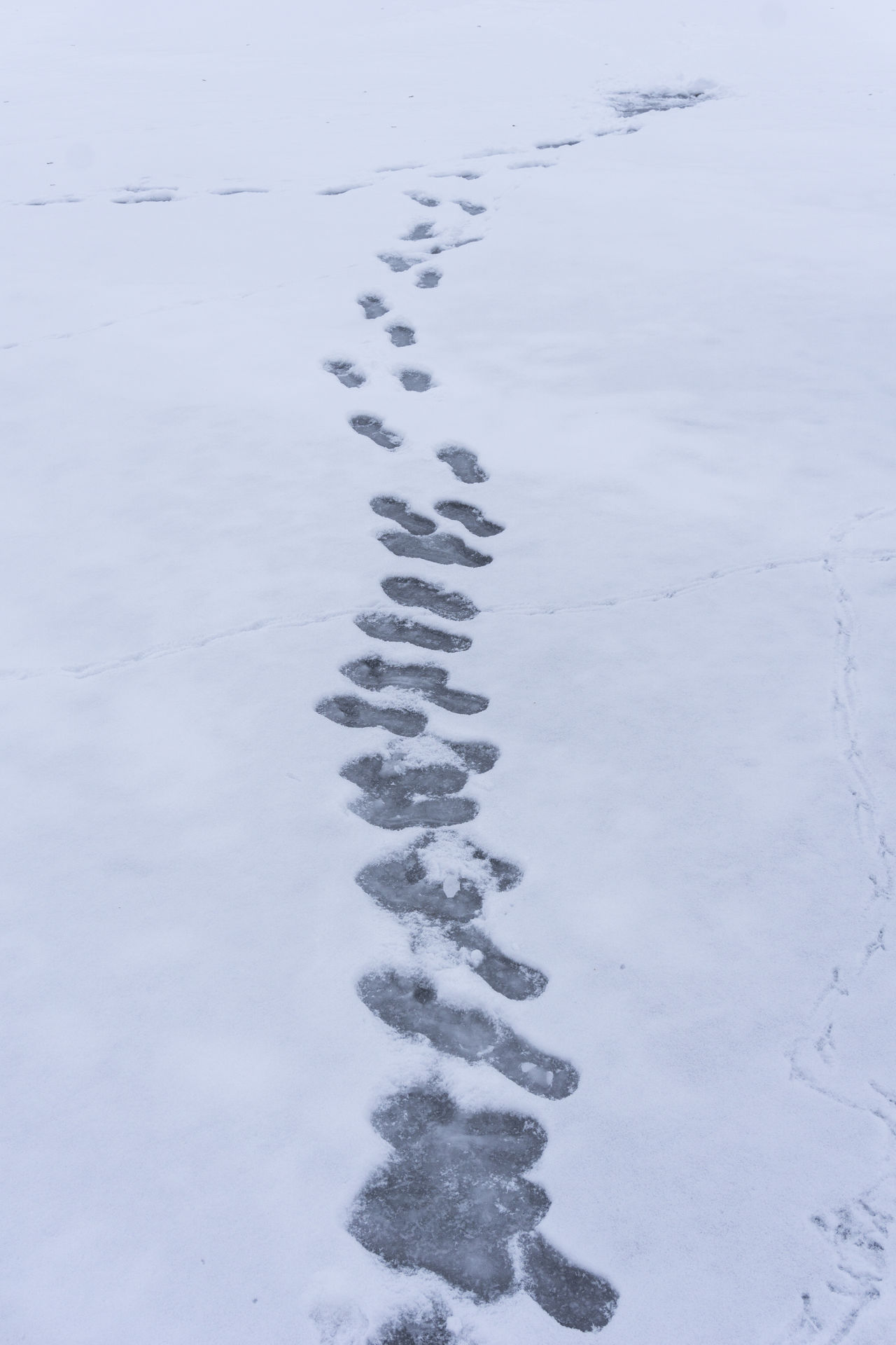 Footprints on a Ice Layer Footprints Frozen Ice Layers Iced Lake Layer Of Ice Nopeople Outdoors Silence Snow Steps Surface Traces Tracks Winter