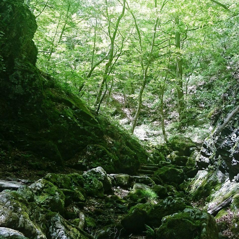 Relaxing:-) Nature Nature_collection Nature Lover Tokyo,Japan Mt.Mitake Okutama Mountains Nature Photography