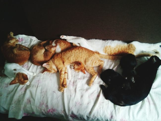 Living with a 12 Cats 🐱 xD but 3 of them are not included on the picture. Cat Lover Puspin Relaxing Furry Friends Meow🐱 White Orange Black Mobilephotography