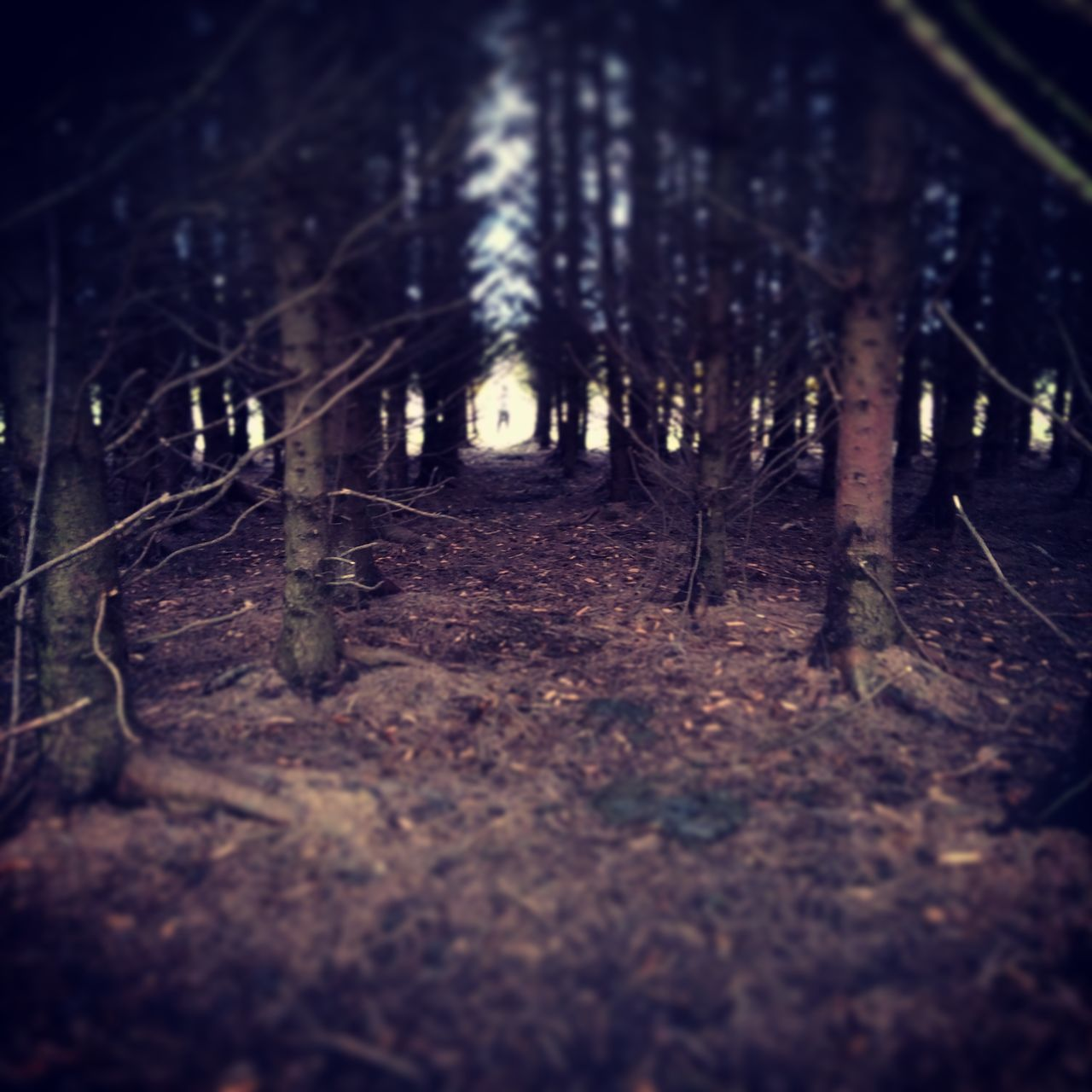 First Eyeem Photo Enjoying Life Forestry Darkness And Light Trees And Sky SlenderMan