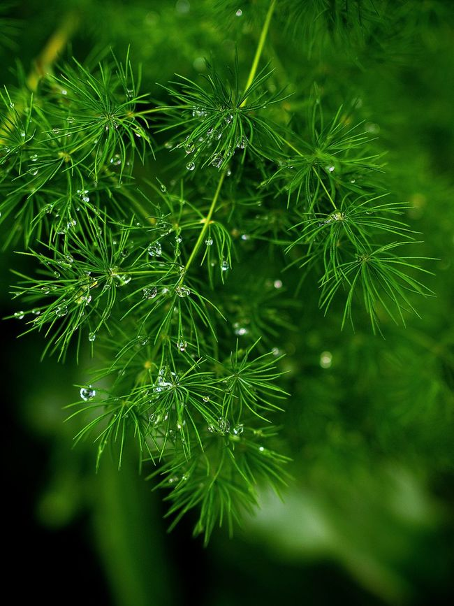 Raindrops Watet Droplets Watet_collection Hello World Naturelovers Nature Photography My Point Of View Enjoying Life Check This Out Mood Captures