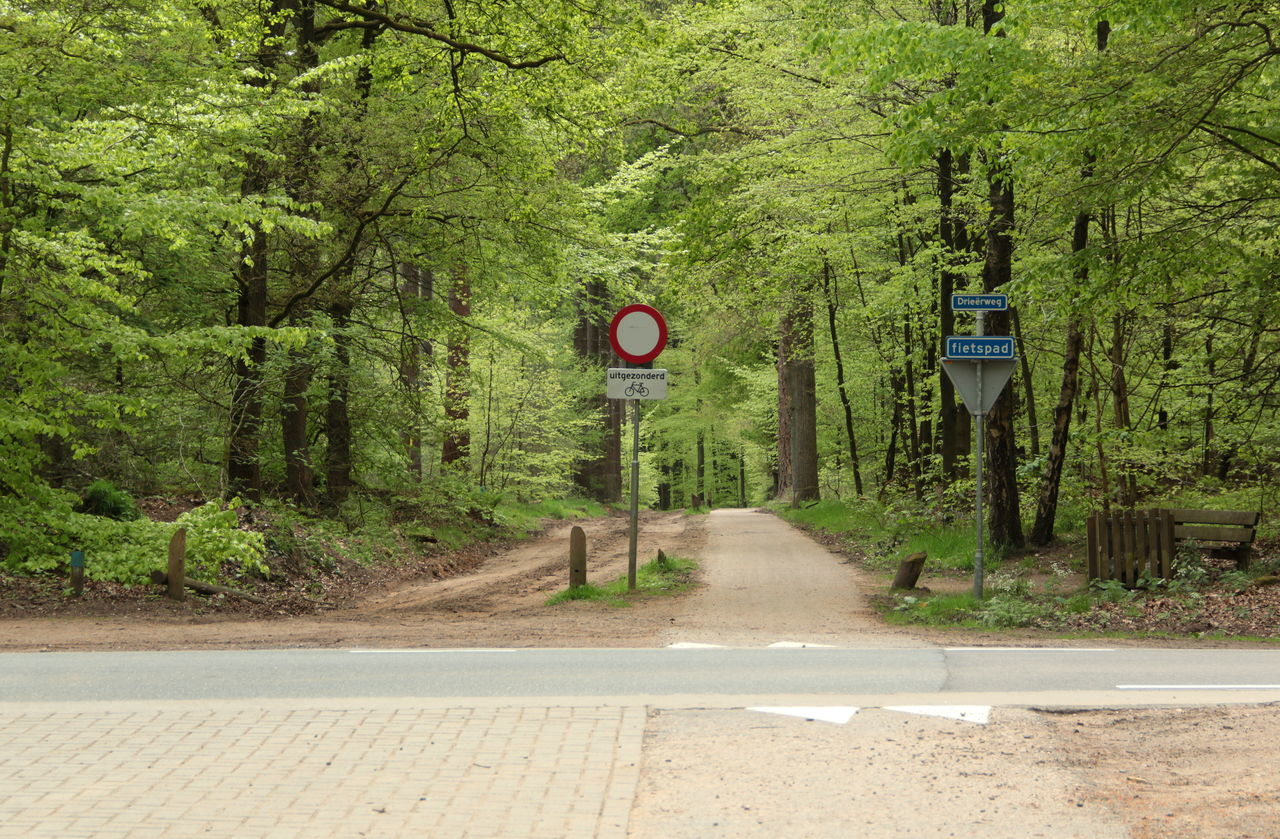 Typical dutch landscape of nature in the netherlands Agriculture Day Ermelo Farm Forest Growth Nature Nature Nature_collection Netherlands Outdoors Real People Road Road Sign Speed Limit Sign The Way Forward Transportation Tree