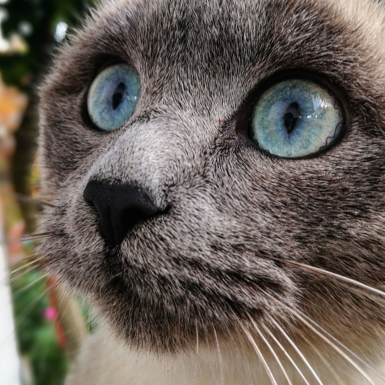 💙💙 One Animal Portrait Looking At Camera Animal Head  Animal Themes Animal Eye Animals In The Wild Cats Of EyeEm Cats Eyeblue