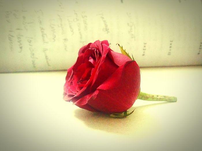Red Rose Randomshot Felling Awesome Eyeem Flower Lover !!!!😛😜😎😋