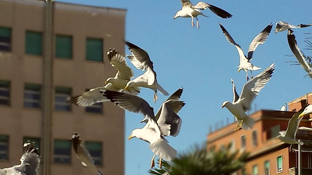 See Gull Animals Birds Park
