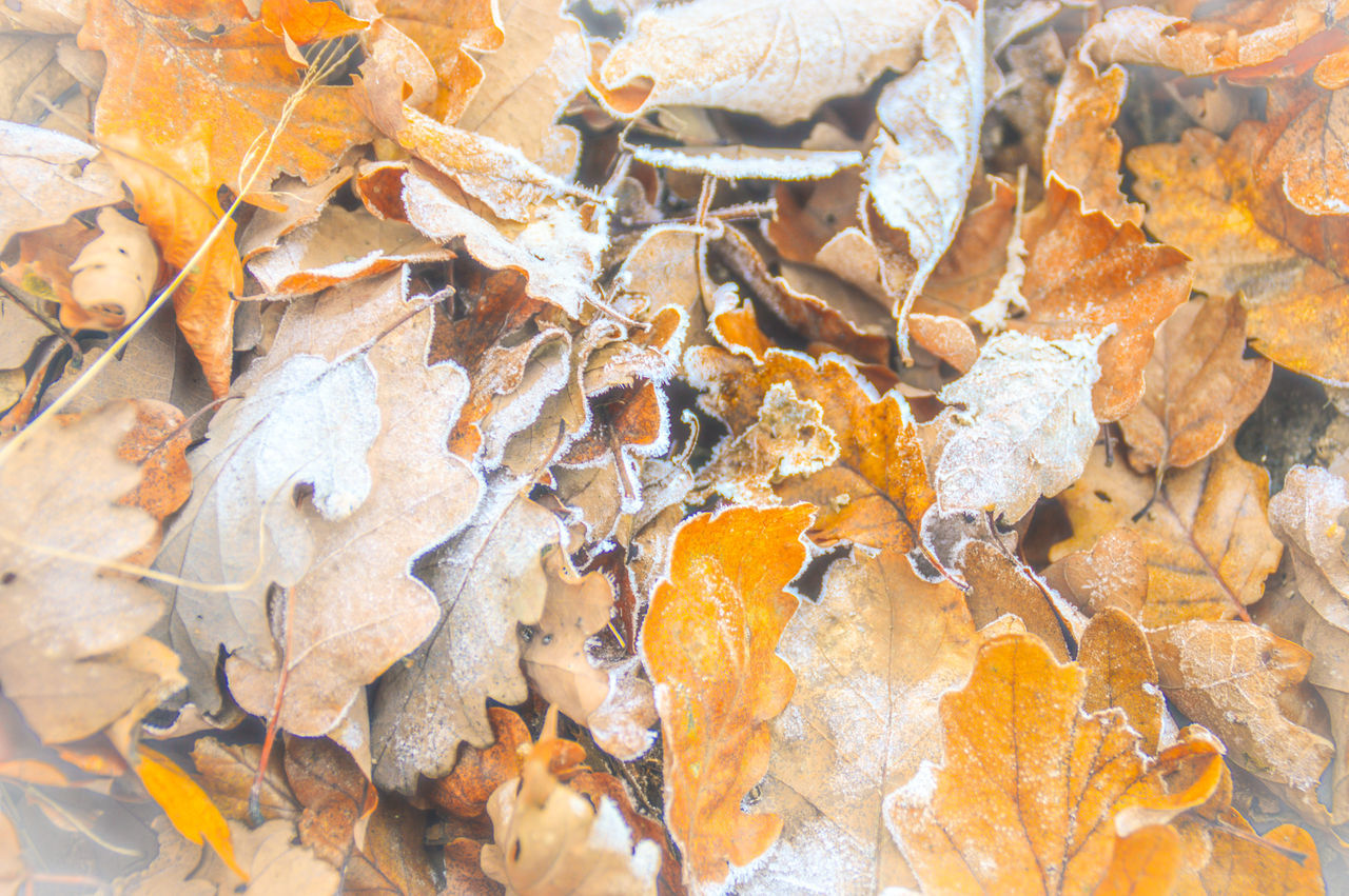 Texture Texture In Nature Full Frame Backgrounds Autumn Change Large Group Of Objects No People Close-up Textured  Nature Day Outdoors Frost End Of Autumn Early Winter First Frost Frosty Leaves Orange Leaves Minimalism Winter Theme Autumn Colors