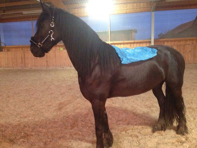 Lilli💝 I Love Horses Relaxing Friesen I Love My Horse IPhoneography Horses Horse Enjoying Life Horse <3