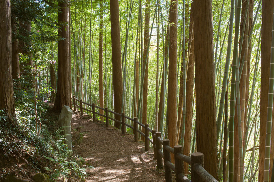 Beauty In Nature Country Day Eco Tourism Forest Freshness Growth Japanese Fores Japanese Garden Landscape Nature No People Outdoors Spirituality Tranquil Scene Tranquility Tree Tree Area Tree Trunk WoodLand Woods